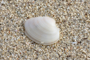 close up of Shell on sand of the beach