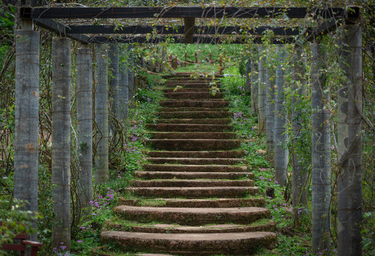 Magic stone steps going a long way up into a tunnel of freshly green dense forest