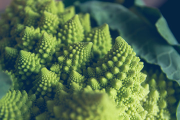 Detail of romanesque cauliflower fractal forms