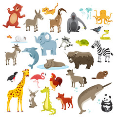 Cartoon animals collection