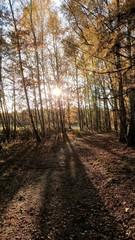 Fototapeta road in the forest