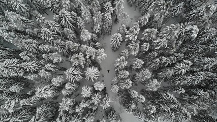 drone view, winter forest drone
