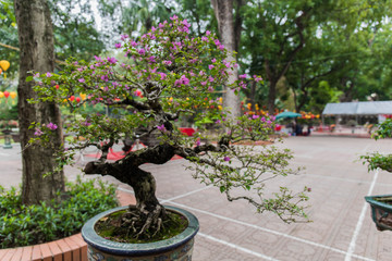 beautiful bonsai tree in a pot at a bonsai exposition