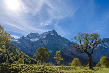 Ahornbäume auf dem Ahornboden in der Nähe der Eng Alm in Österreich