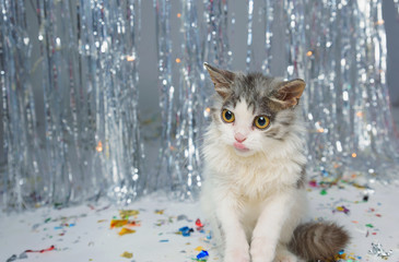 Little furry kitten playing on a festive background
