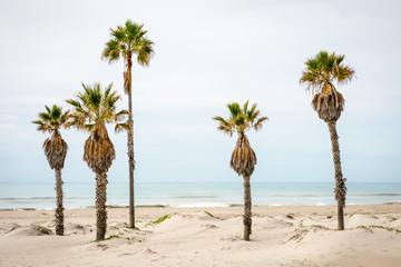 Palm trees at a beach in California, Pacific Ocean