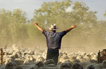 Mustering merino sheep in the west of New South Wales, Australia.