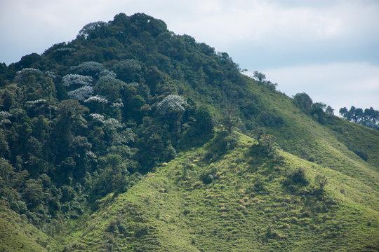 Naturaleza Colombiana