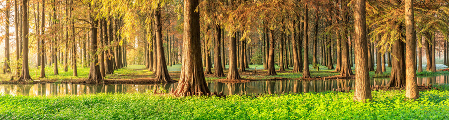 Beautiful autumn forest and green aquatic plants scenery,panoramic view