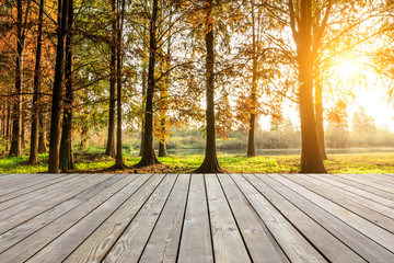 Wooden board top and beautiful forest in autumn season