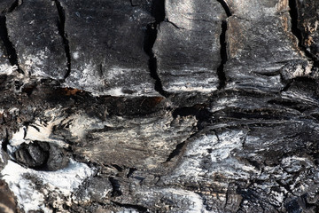 the texture of burnt wood