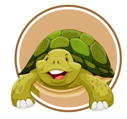 Turtle on circle template