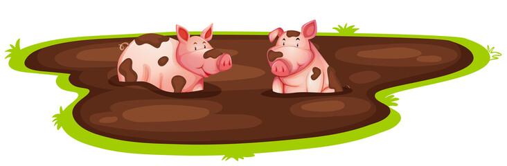 Pig playing in mud