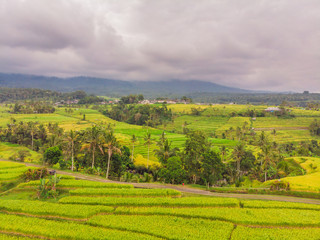 Aerial top view photo from flying drone of green rice fields in countryside Land with grown plants of paddy. Bali, Indonesia