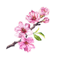 Flowering cherry tree. Pink apple flowers, sakura, almond flowers on blooming branch. Watercolor