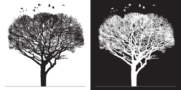 Tree silhouette and birds - black and white vector illustration. Realistic detailed graphic image of natural forest plant with bare branches without leaves.