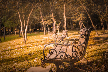 old wooden vintage bench style in park summer morning lifestyle background
