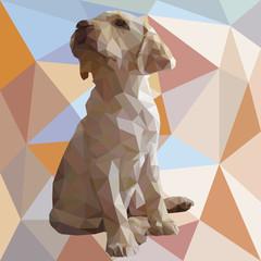 Labrador low poly puppy
