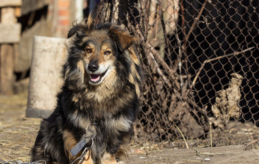 Shaggy village dog basks in the sun in the first spring days.