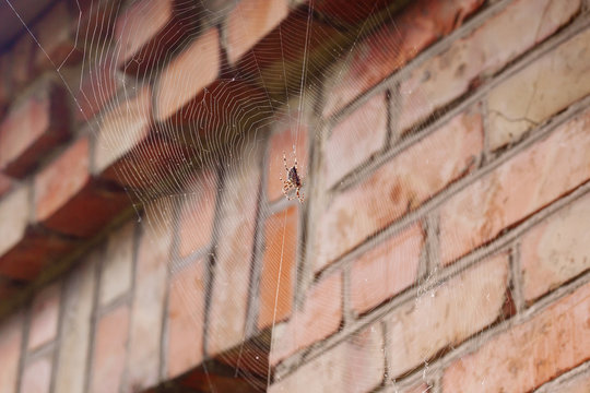 A spider on a web near the house