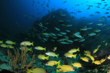 Fish in ocean. Reef fish school underwater