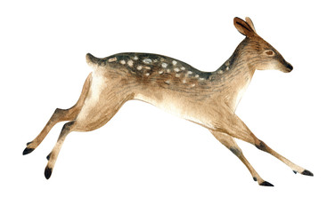 Watercolor illustration of a brown female deer jumps. Realistic sketch of wild forest animals.