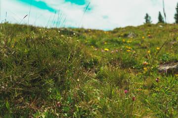 tyrolean Alps Meadow