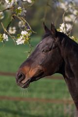 Kopf eines Pferdes