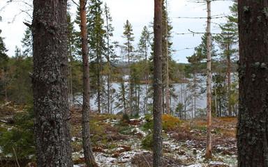 Lake in Bergslagen,Sweden