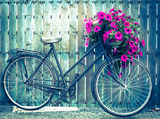 old vintage bicycle with flower basket on a wooden gate, cross processed vintage style effect