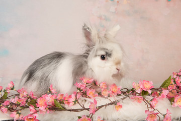 Cute rabbit on a romantic pastel colored background