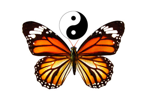 beautiful orange butterfly with the symbol of yin yang. isolated on white background