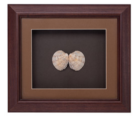 photo frame in sea shell