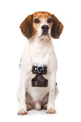 Dog with camera isolated on white background