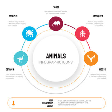 Abstract infographics of animals template. Ostrich, Octopus, Mouse, Mosquito, Moose icons can be used for workflow layout, diagram, business step options, banner, web design.