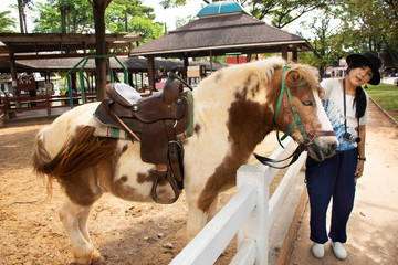 Traveler thai woman travel and posing for take photo with Dwarf horse standing relax in stable at animal farm in Saraburi, Thailand