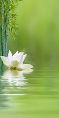 Foto auf Gartenposter Lotosblume composition aquatique avec lotus et bambous