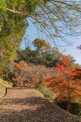 秋の岡城址の眺め【大分県】