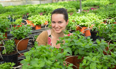 Young female worker arranging peppermint while gardening