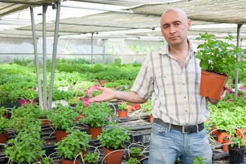 Male farmer working with mint plants