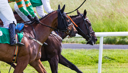 Close up on two Race horses competing in a race