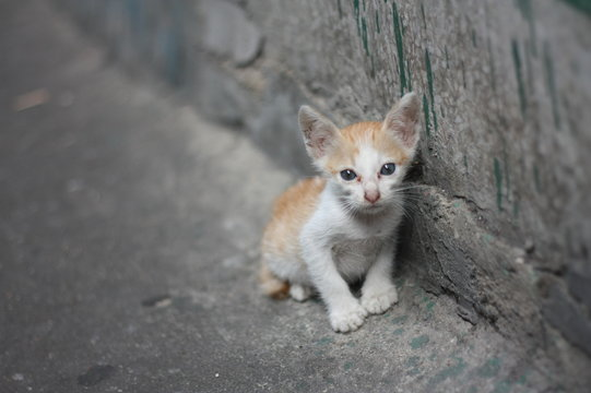poor alone white orange kitty - cat without mom standing beside the dirty wall near by canal.