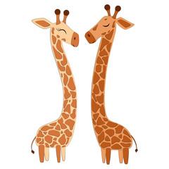 Giraffe Set Vector Illustration