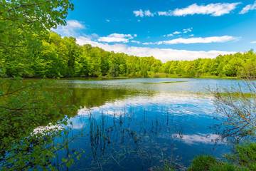 forest lake on springtime noon. beautiful nature scenery. beech forest around the body of water. beautiful sky with fleecy clouds reflecting on the surface