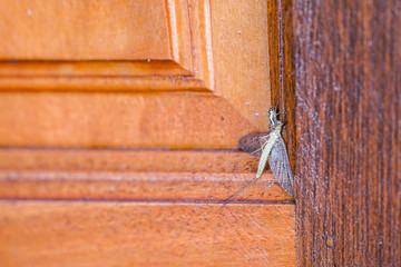 little spider hunts a bigger insect victim on the door.