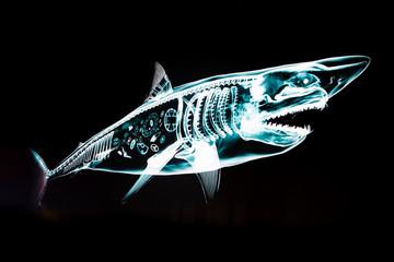 requin lumières horlogerie