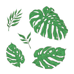 Bright set of green tropical leaves. Vector