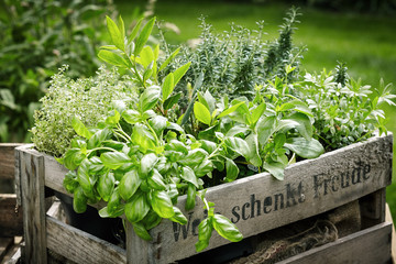 Papiers peints Jardin Pots of assorted fresh herbs in a wooden crate