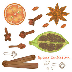 Vector hand drawn illustration of  orange, cloves, cardamom, cinnamon