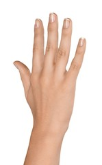 Raised Hand / Five Fingers